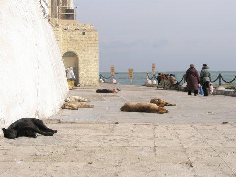 Strand Arkadia in Odessa, März 2008
