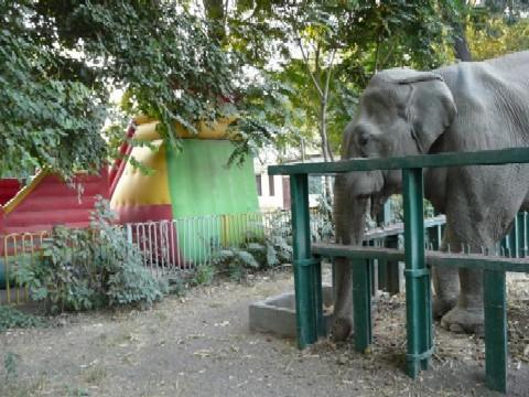 Eine der Attraktionen: die Hüpfburg; rechts: ein Elefant
