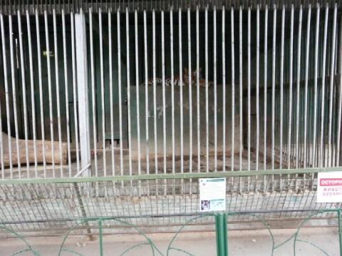 Untermieter gesucht: der Tiger